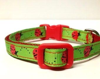 Cat & Small Dog collar