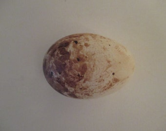 A hollow replica golden eagle egg.