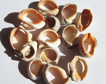 Sea shells sea shell 14 parts seashell jewelry supply craft shells natural hole seashells beads mobile making supplies beach finds (SSH-20)