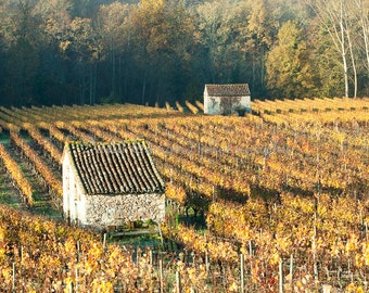 Autumn Vineyards in Luzech, France
