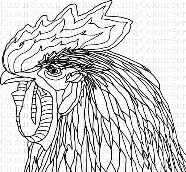 Coloring Pages For Adults Rooster : Rooster printable adult coloring page instant download