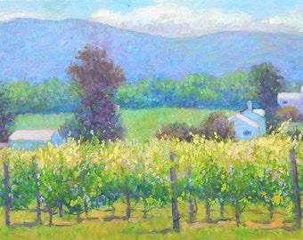 Veritas vineyard in July