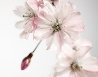Ancient blossom No.2, photoart print/poster, 70x100cm (27,6x39,4inches)