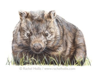 Original Wildlife Art - Wombat - Wildlife Nature Art