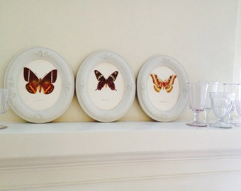 Set 3 Victorian frames with Butterfly prints