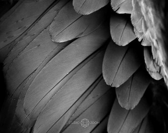 Bird Feather Texture Print, Bird Photo, High Contrast Black and White Photo, Exotic Wildlife Home Decor, Macaw Parrot Wall Art