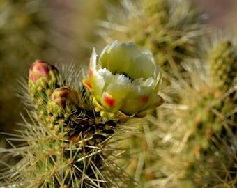 White Desert Flower