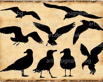 Vector SEAGULLS, Download, SVG, dxf, AI, pdf, eps, png, jpg, Saddleback, bird, coupons