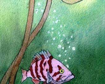 Art Card; Tiger Rockfish