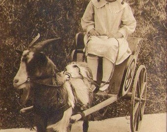 Funny Photo of Girl in Goat-Pulled Cart, Vintage Photo, Found Photo, Vernacular photograph