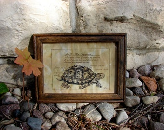 Pen and Ink Box Turtle Print 5x7 Vintage -Like Science Diagram Picture Wall Art