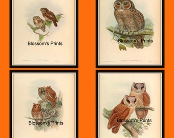 Set of four antique bird prints Plates 61,62,63, and 64