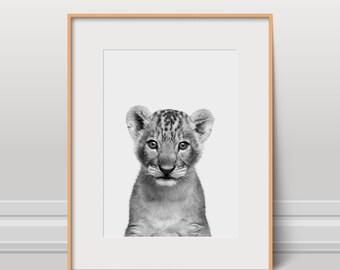 Lion Print, Animal Poster, Instant Download, Kids Art, Nursery Wall Art, Animal Photo, Wild Art, Lion Cub