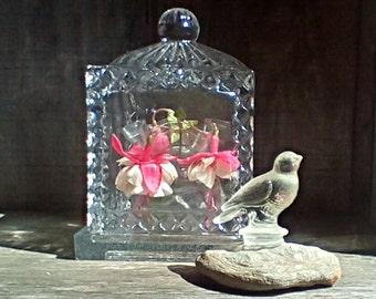 Square Glass Garden/Collectable Cloche