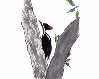 Postcard bird from French Guiana, Pic