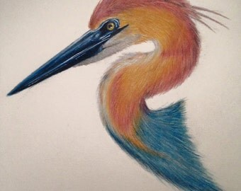 Custom Pet Portrait ( Colored Pencil )