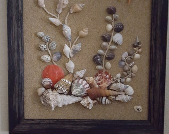 Shell picture in frame