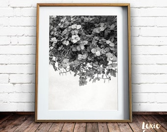 Black and White Plant Print, Leaf Print, Nature Photography, Groundcover Plant, Black and White Photo, Leaf Print, Printable Art