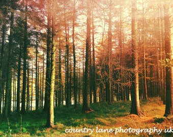 Autumn Trees in Macclesfield Forest