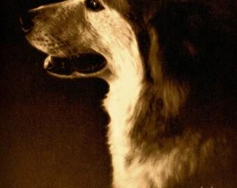 Dog Art, Malamute Photograph, Sled Dogs, Malamute Art
