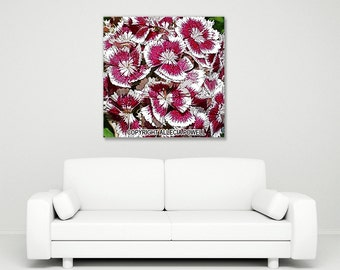 Sweet William large canvas wall art
