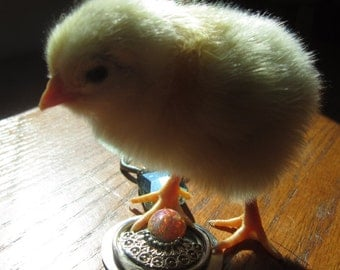 Chick Sophisticate Jewelry