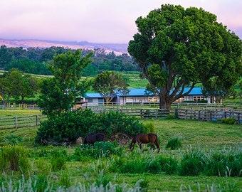 "Photography  ""Makawao Farm at Dusk"" 4x6"