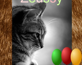 Preparing for Zeussy - The Kitten