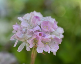 Pretty In Pink Flower Photograph #2