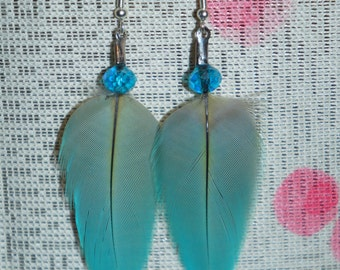 MD Blue macaw feather earrings