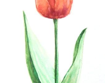 Tulip, watercolor, original, not printed