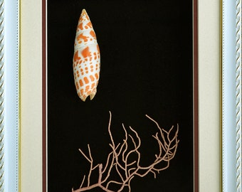 Seashell Mitra Mitra With Pink Coral In Quality Shadowbox