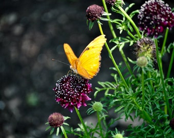 Yellow butterfly by the flowers