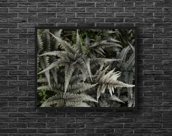 Fern Photo - Botanical Photo - Forest Photo - Green - Nature Photo - Fern Print - Forest Print - Fern Wall Art - Fern Wall Decor