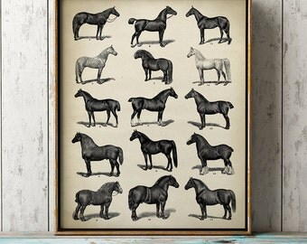 Aged HORSE PRINT, Horse breeds poster, sepia black and white wall decor, equestrian decoration, vintage horses chart