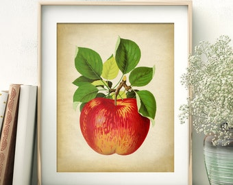 Red apple botanical print, apple print, apple poster, yellow apple, botanical art, botanical print, greengrocers decorationr