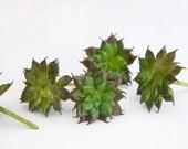 Set of 5 Artificial Succulents in Dark Green - Fake Succulents - artificial succulents - item 0362