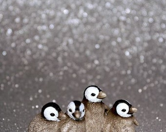 Baby Penguins - Photograph - Various Sizes