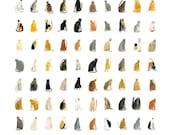 Illustration art print || 100 CURIOUS CATS