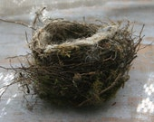REAL BIRD NEST