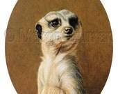Meerkat postcard 6-pack