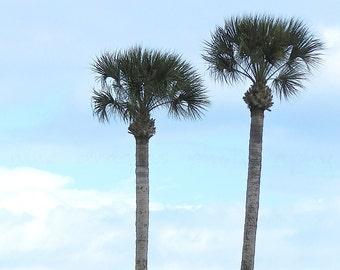 Pastel Palm Tree Print, Coastal Wall Art, Palm Tree Art, Island Print, Pink Palm Tree Photography, Tropical Decor, Florida Tropical Art