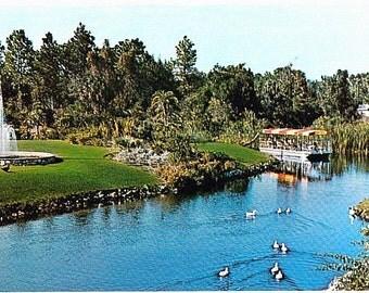 Vintage Florida Postcard - Scenic Boat Ride at Homosassa Springs (Unused)
