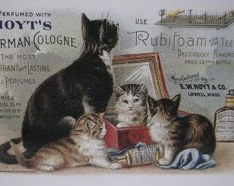 Tuxedo Mother Cat and Tabby Baby Kittens-Vintage Cat Postcard-Hoyts German Cologne-Vintage Reproduction