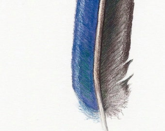 Blue feather painting -- original coloured pencil drawing