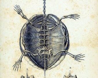 Turtle Skeleton #2 Notecard Halloween Handmade Vintage Image
