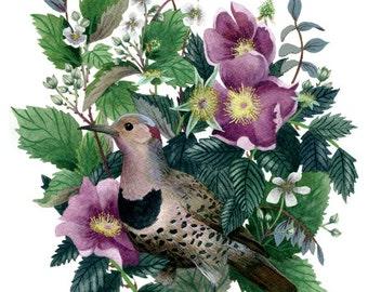 Fine Art Print of Original Watercolor Painting - Wildwood Flicker