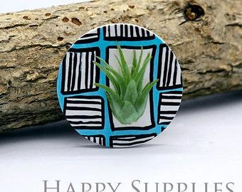 Wearable Tillandsia Plant Jewelry Pendant Art (WTP013)