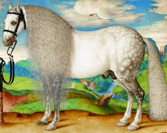 antique white stallion illustration digital download