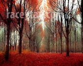 Rustic Fall Forest in Orange Red Brown- Nature Photography- Large Wall Art, Cabin Decor